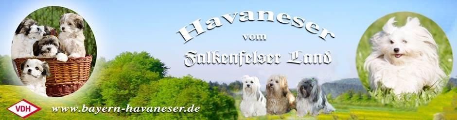 Logo Havaneser vom Falkenfelser Land